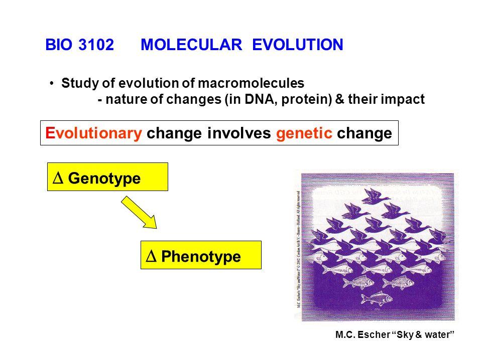Evolutionary Change Involves Genetic Change Phenotype