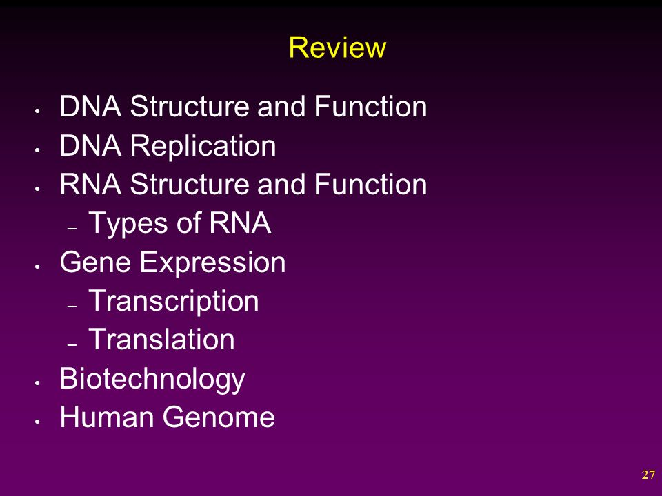 1 DNA and Biotechnology. 2 Outline DNA Structure and Function DNA ...