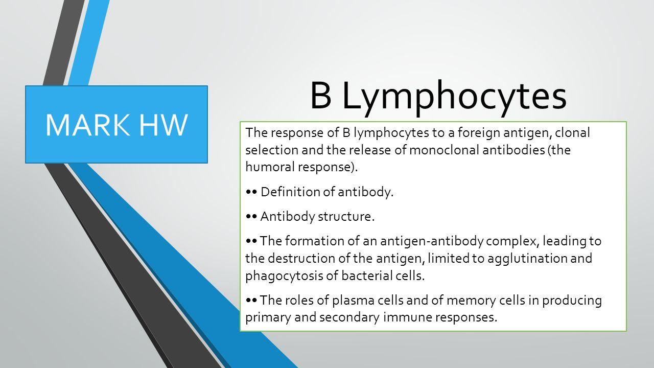 b lymphocytes the response of b lymphocytes to a foreign antigen