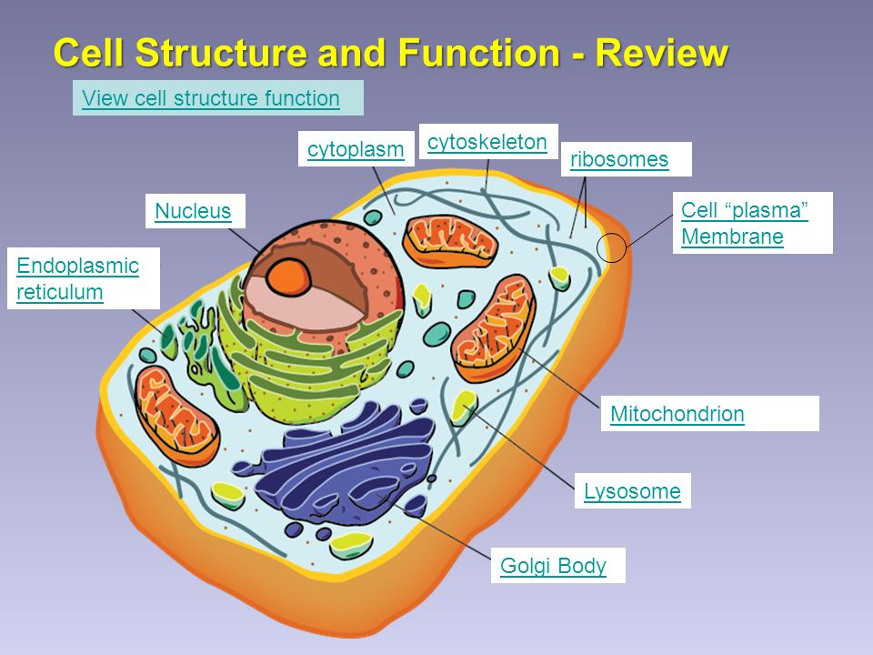 Cell Structure And Function Review Cell Plasma Membrane
