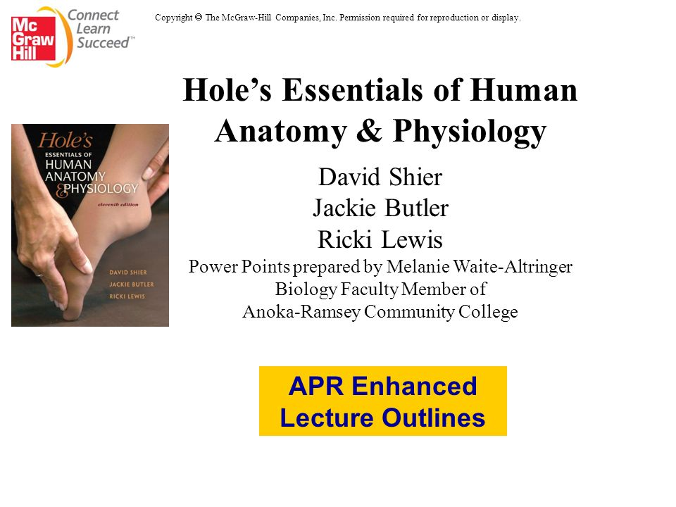 Holes Essentials Of Human Anatomy Physiology David Shier Jackie