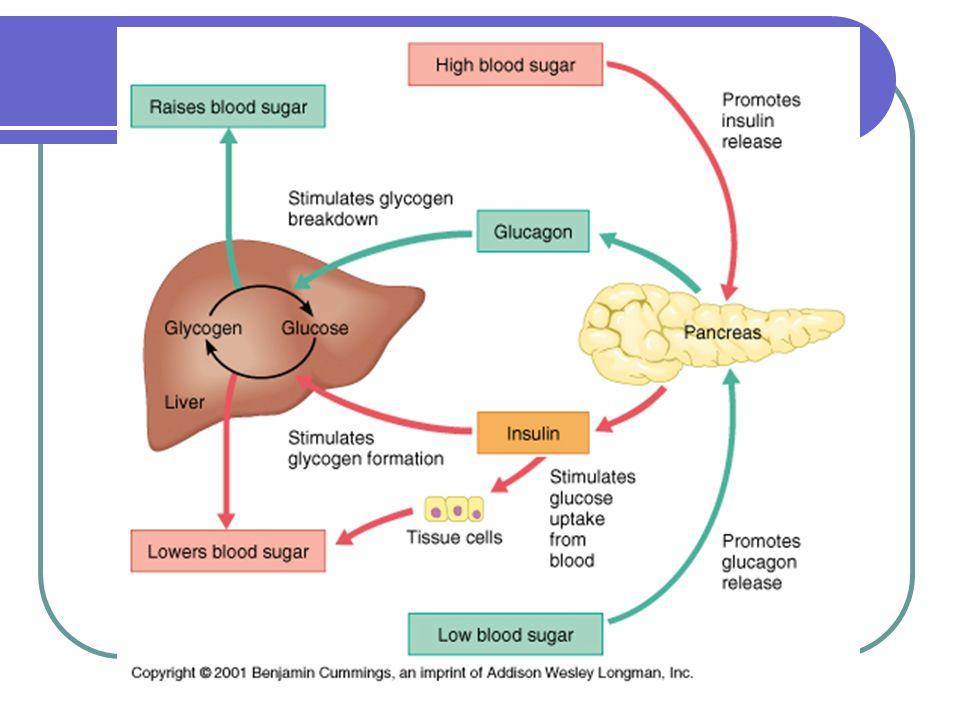 insulin glucagon and diabetes mellitus slideshare