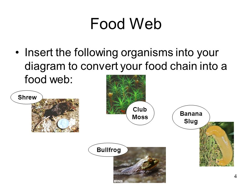 1 Warm Up Draw A Food Chain Using These Organisms Millipede