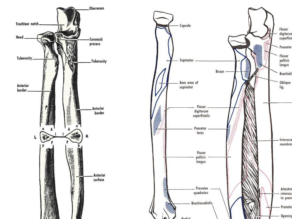 Lower Leg. Anatomy Bone Tibia 2 nd longest bone in body Weight ...