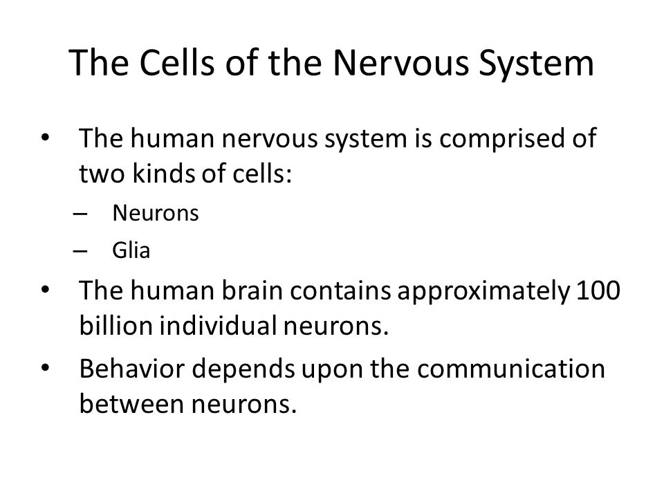 Nerve Cells And Types Ahmed Abdullah Physiology The Cells Of The