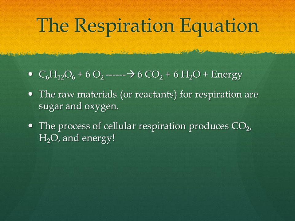 The Respiration Equation C 6 H 12 O O  6 CO H 2 O + Energy C 6 H 12 O O  6 CO H 2 O + Energy The raw materials (or reactants) for respiration are sugar and oxygen.