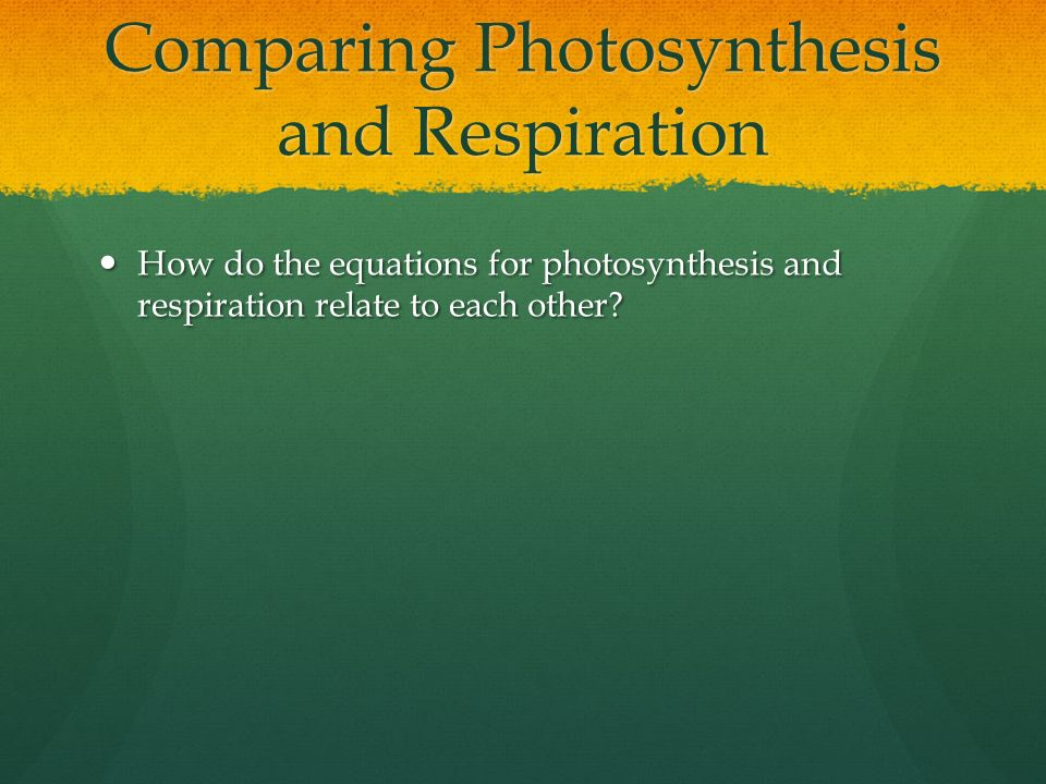 Comparing Photosynthesis and Respiration How do the equations for photosynthesis and respiration relate to each other.