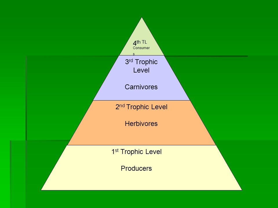 energy flow in ecosystems science 10 trophic levels trophic