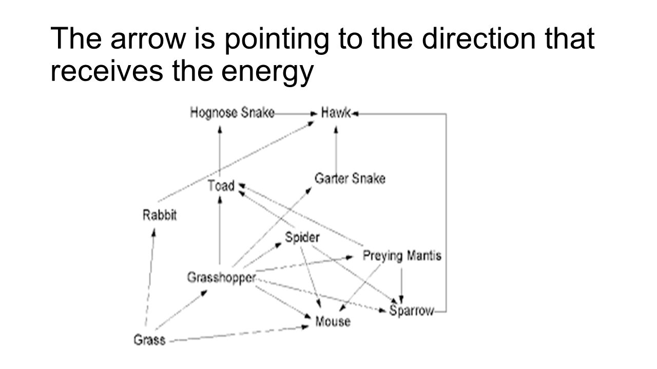 The arrow is pointing to the direction that receives the energy