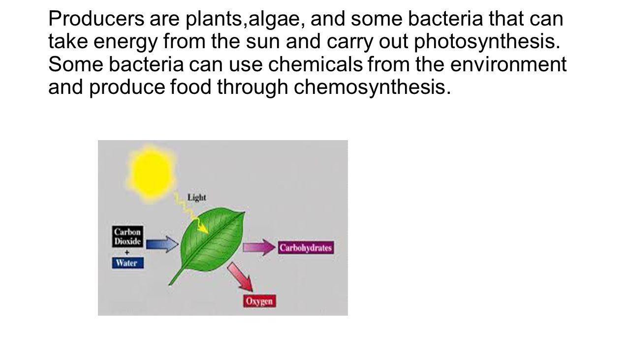 Producers are plants,algae, and some bacteria that can take energy from the sun and carry out photosynthesis.