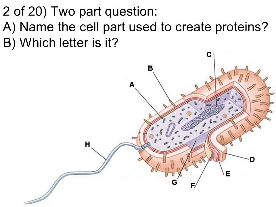 Bacteria chapter challenge directions after each question write 1 of 20 two part question a what do cyanobacteria produce that creates ccuart Images