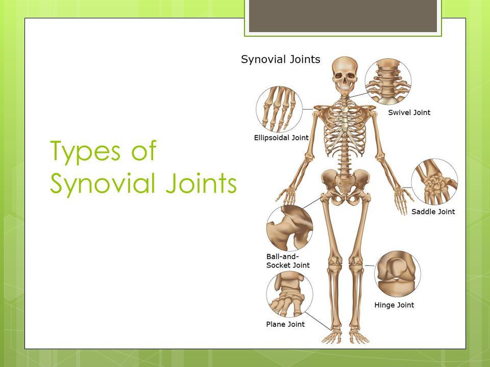 Types Of Joints And The Anatomy Of The Synovial Joint Ppt Download
