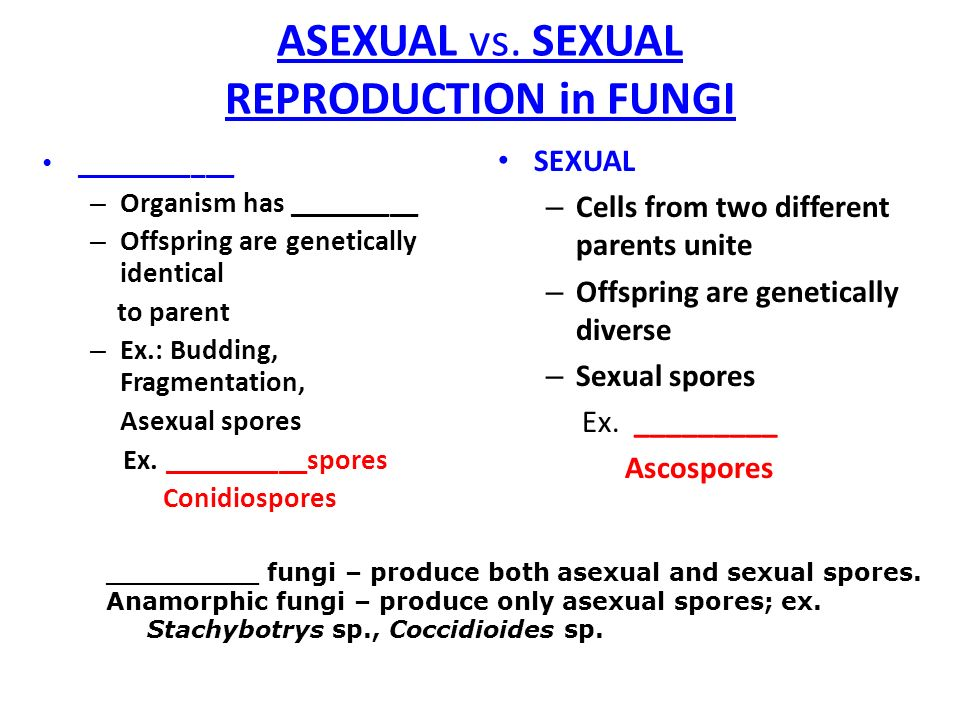 Asexual and sexual reproductive spores of fungi