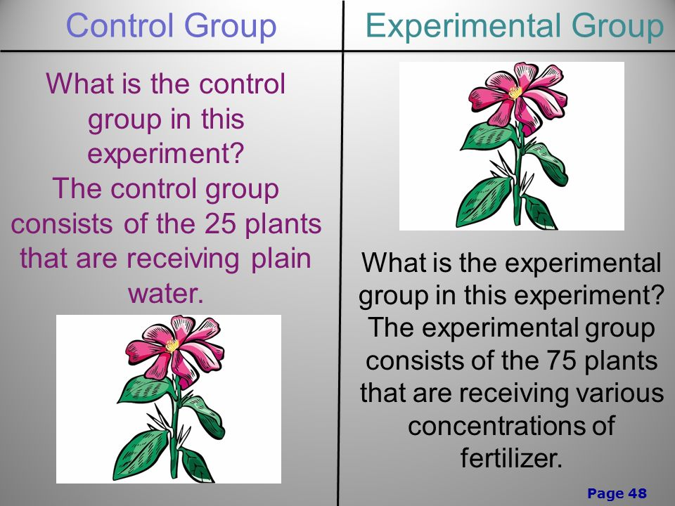 Page 48 Control GroupExperimental Group What is the control group in this experiment.
