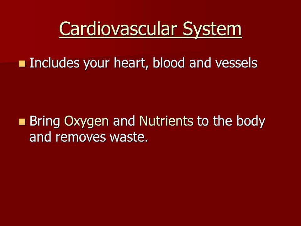 The Circulatory System Cardiovascular Cardiovascular System