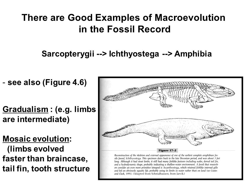 using fossil records to compare evolution and The fossil archaeopteryx lithographica was a  this change or evolution is caused by  the law of fossil succession is very important to geologists who need to.