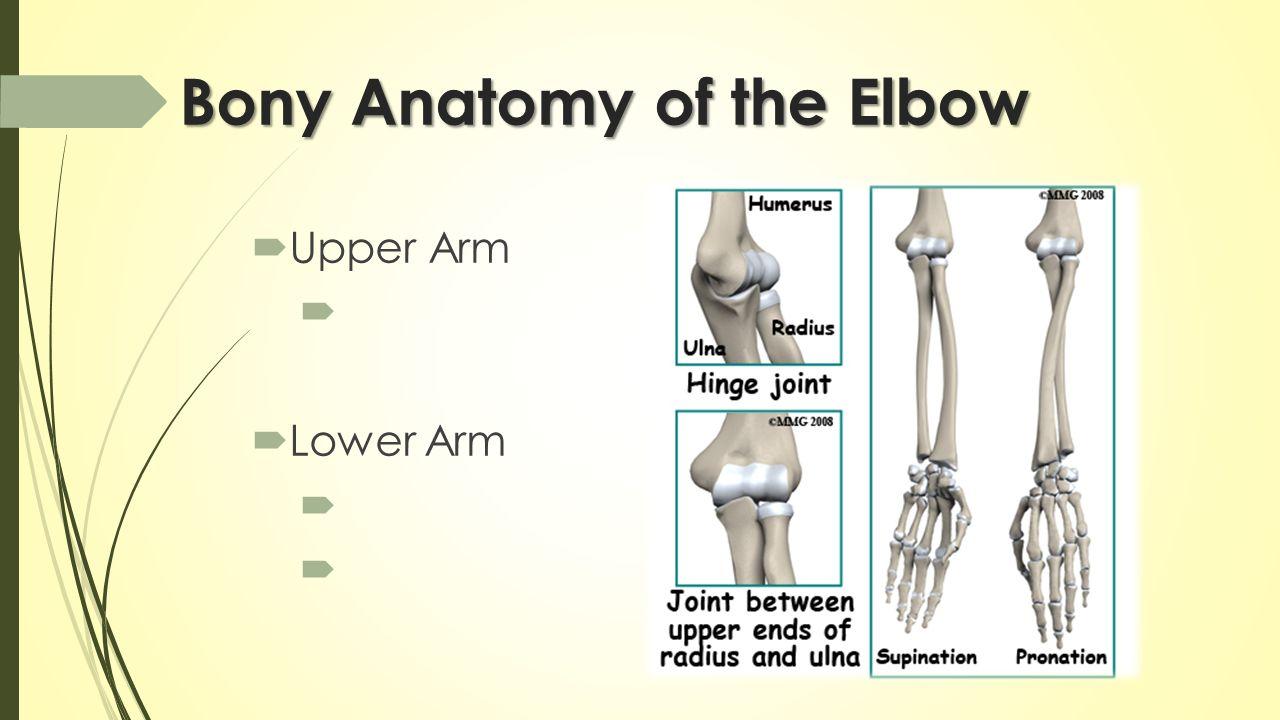 The Elbow Wrist Hand Hard Soft Tissue Anatomy Ppt Download
