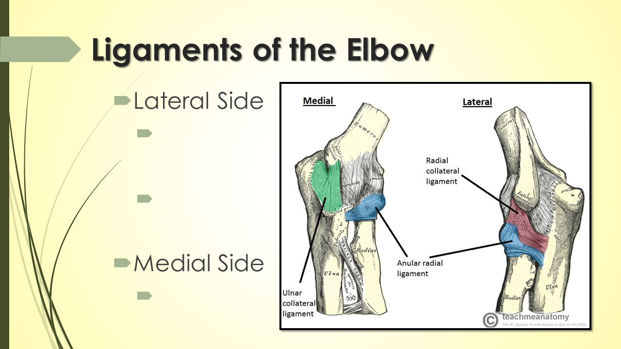 The Elbow, Wrist & Hand Hard & Soft Tissue Anatomy. - ppt download