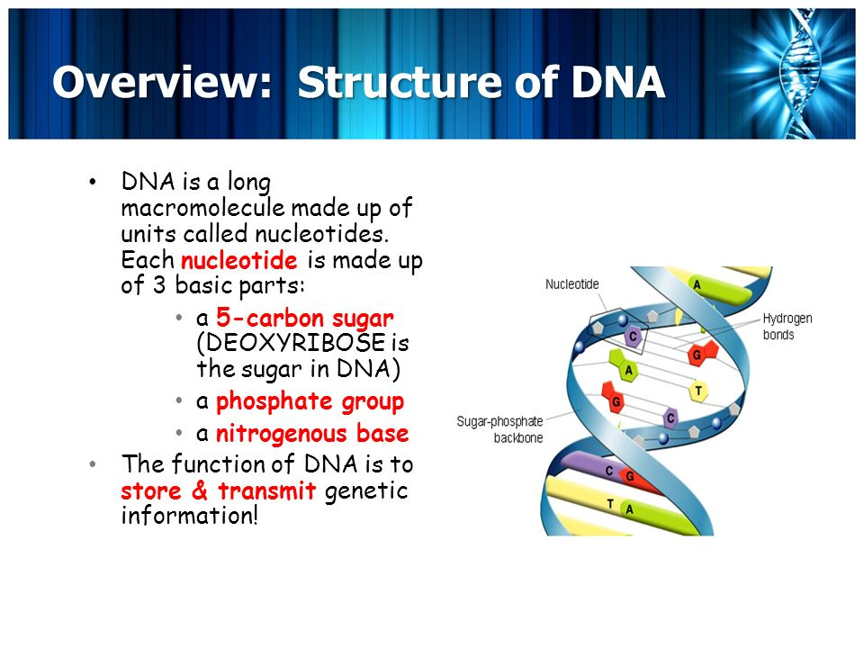 Chapter 8 From Dna To Proteins Day One What Is Dna Your Genetic
