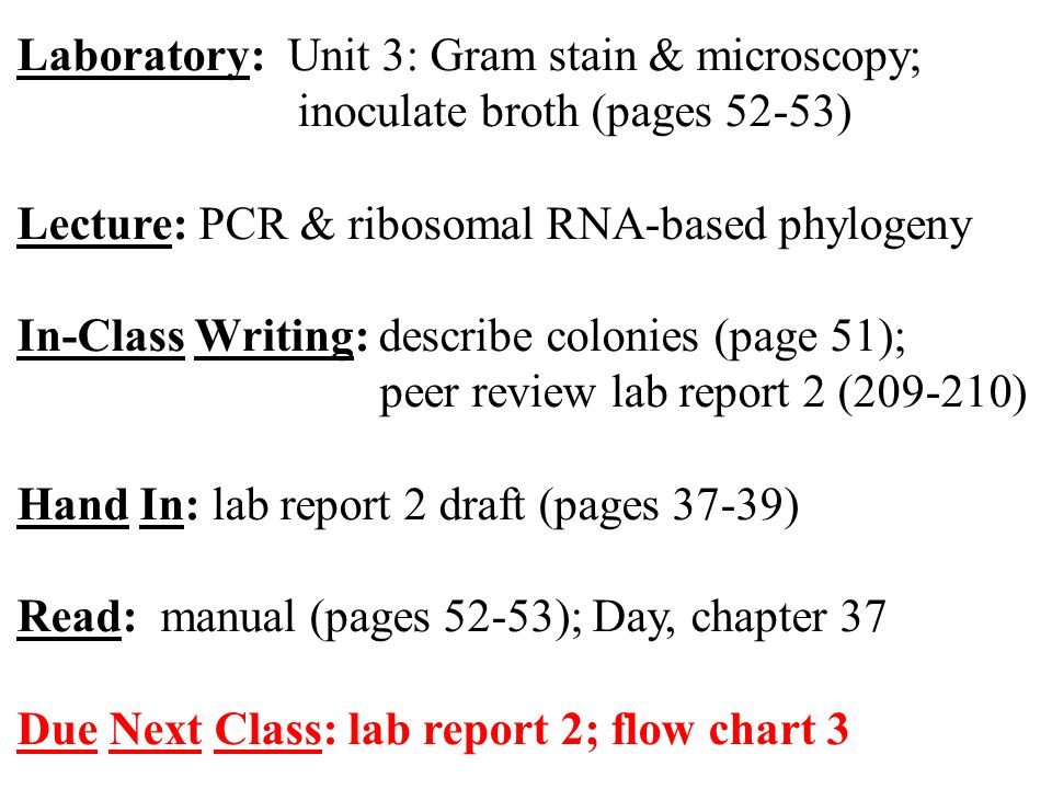 Laboratory Unit 3 Gram Stain Microscopy Inoculate Broth Pages