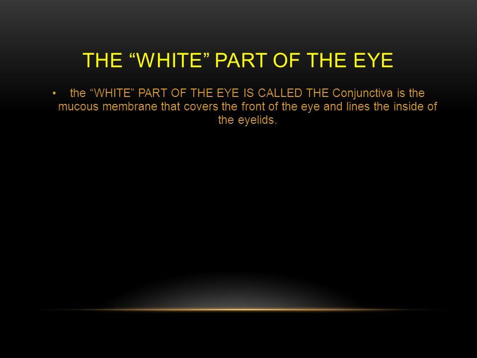 Viviana Guzman 42814 Life Science Period 5 Parts Of The Eye Ppt
