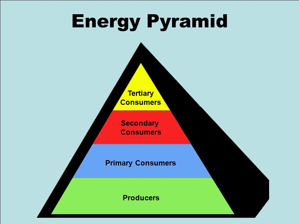 research article ecological pyramid