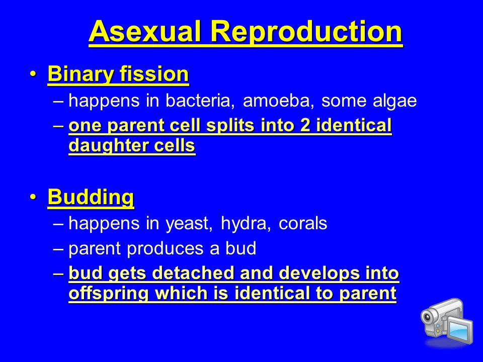 Asexual reproduction binary fission video