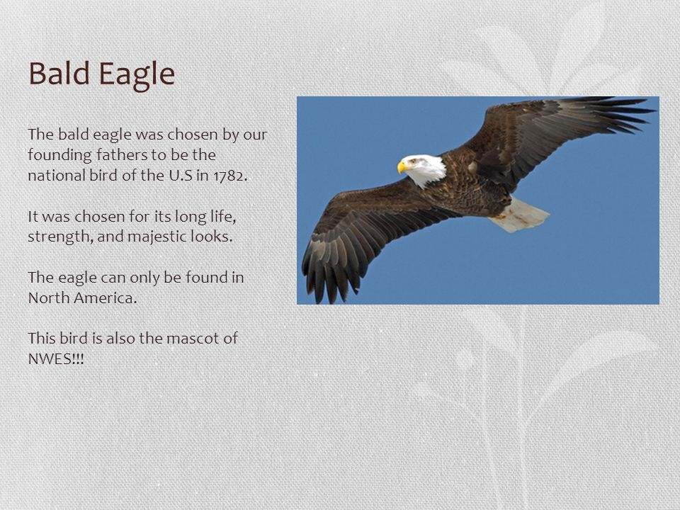 By Isabelle Greathouse Symbols Of The United States Ppt Download