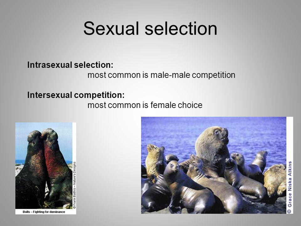 Intrasexual selection female choice
