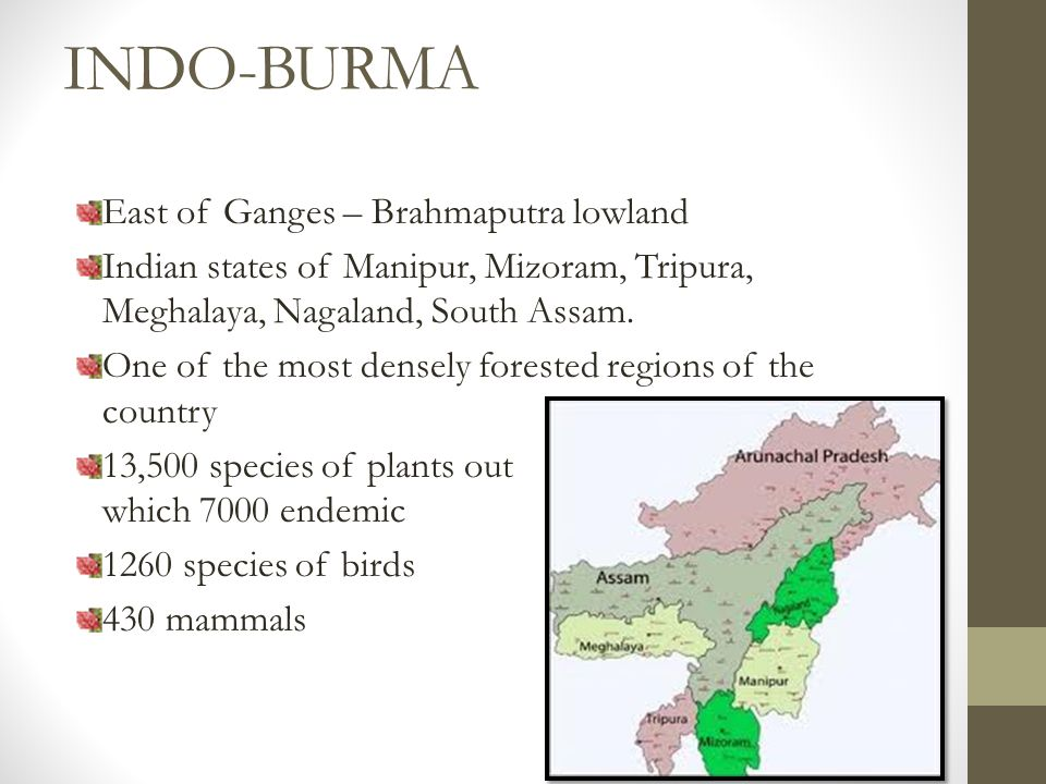 INDO-BURMA East of Ganges – Brahmaputra lowland Indian states of Manipur, Mizoram, Tripura, Meghalaya, Nagaland, South Assam.