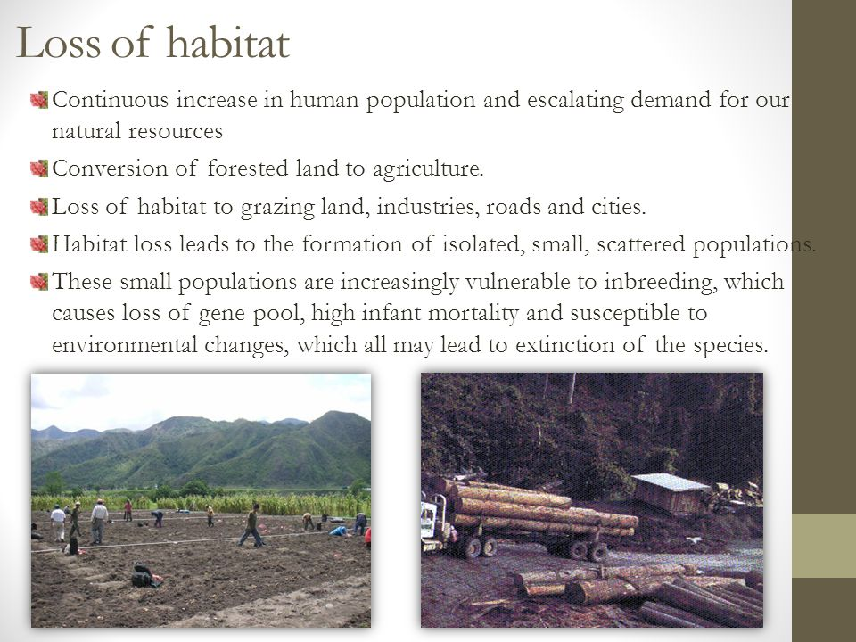 Loss of habitat Continuous increase in human population and escalating demand for our natural resources Conversion of forested land to agriculture.