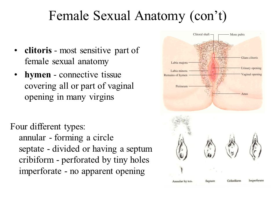 What are the most sensitive parts of a woman