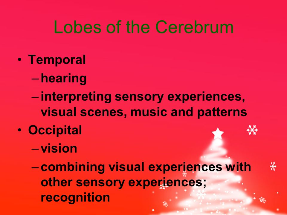 Lobes of the Cerebrum Temporal –hearing –interpreting sensory experiences, visual scenes, music and patterns Occipital –vision –combining visual experiences with other sensory experiences; recognition