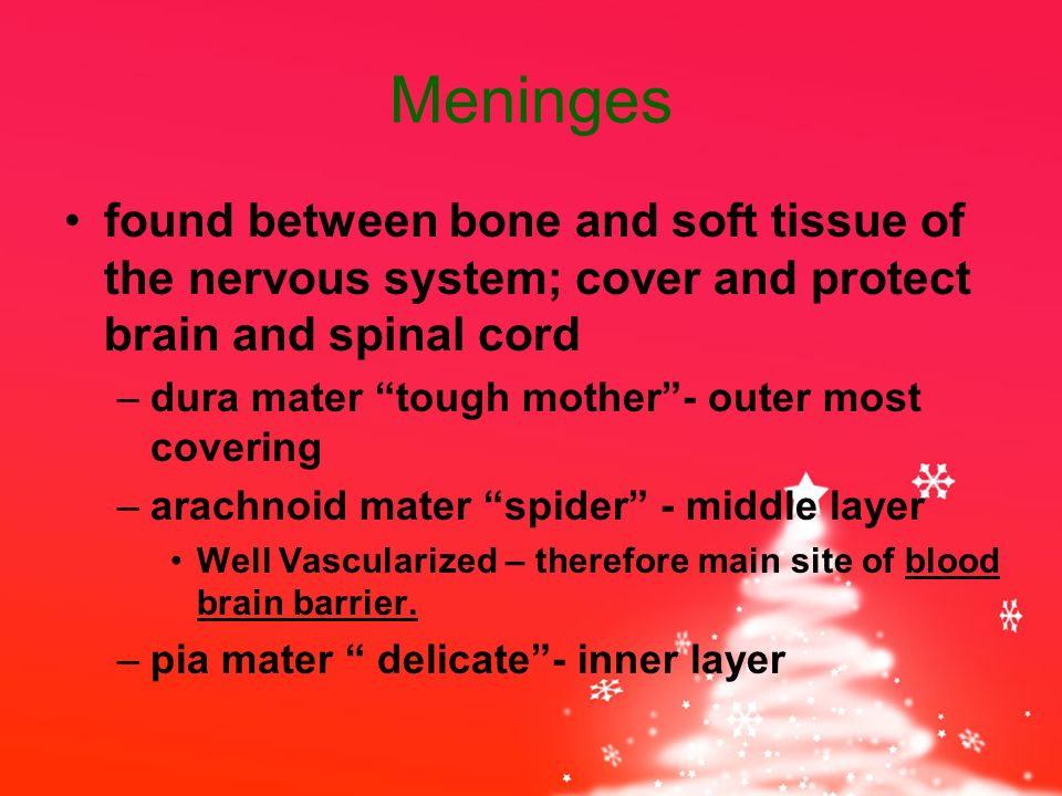 Meninges found between bone and soft tissue of the nervous system; cover and protect brain and spinal cord –dura mater tough mother - outer most covering –arachnoid mater spider - middle layer Well Vascularized – therefore main site of blood brain barrier.