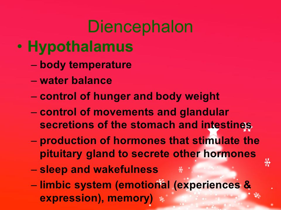 Diencephalon Hypothalamus –body temperature –water balance –control of hunger and body weight –control of movements and glandular secretions of the stomach and intestines –production of hormones that stimulate the pituitary gland to secrete other hormones –sleep and wakefulness –limbic system (emotional (experiences & expression), memory)