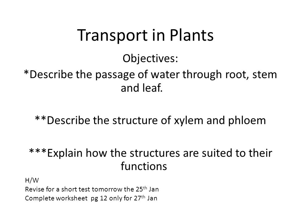 Transport in Plants Objectives: *Describe the passage of