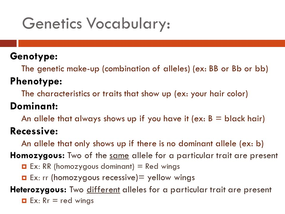 Genetics Vocabulary Gene A Section Of Dna That Encodes A