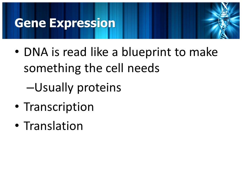 Dna genes and gene expression grades 9 12 m wetherbee ppt download 13 gene expression dna is read like a blueprint to make something the cell needs usually proteins transcription translation malvernweather Gallery