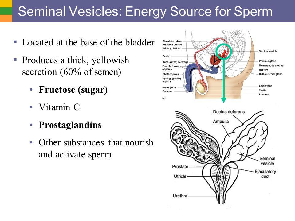 Substance that nourishes sperm