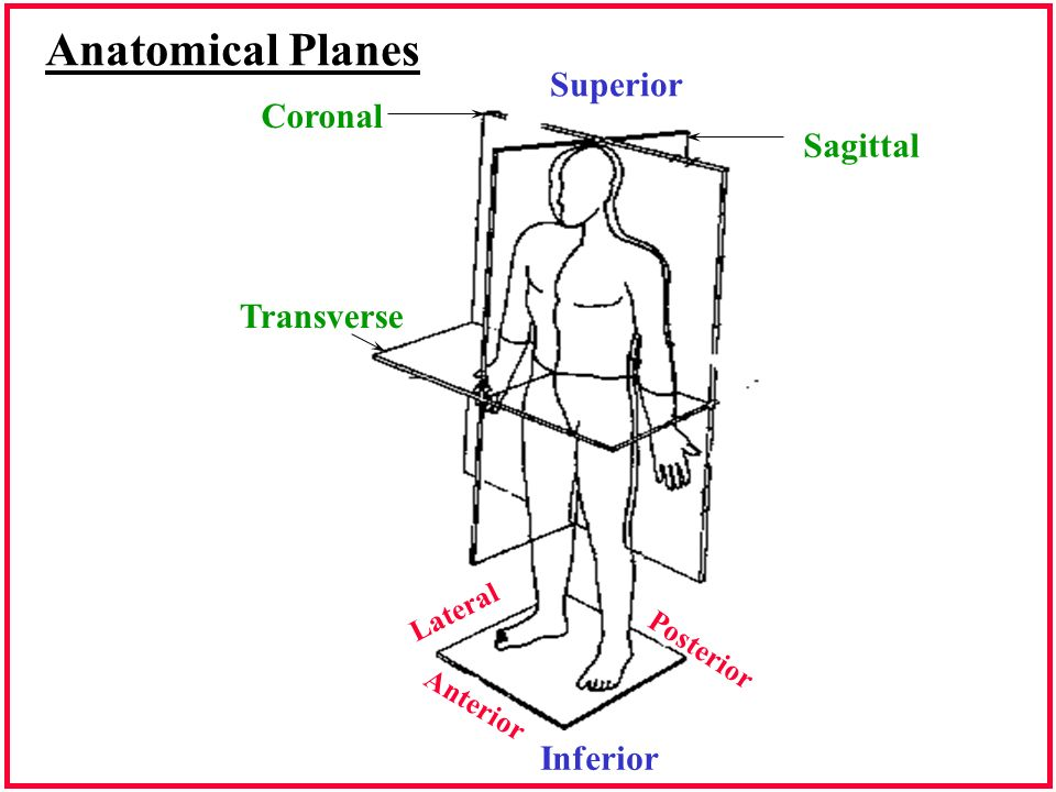 Respiratory Anatomy 12700 Anatomical Planes Superior Inferior