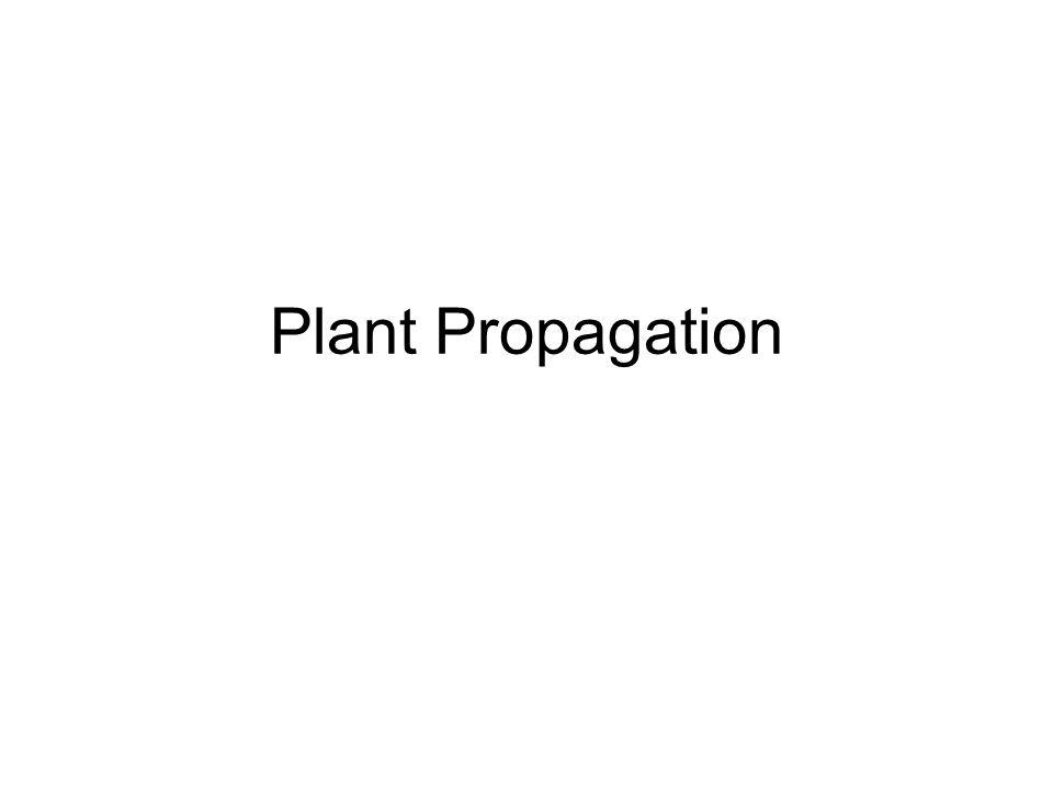 Mature propagation pics