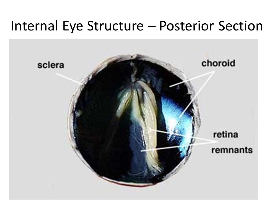 What are the parts of the eye? Let\'s use a diagram to help us get ...