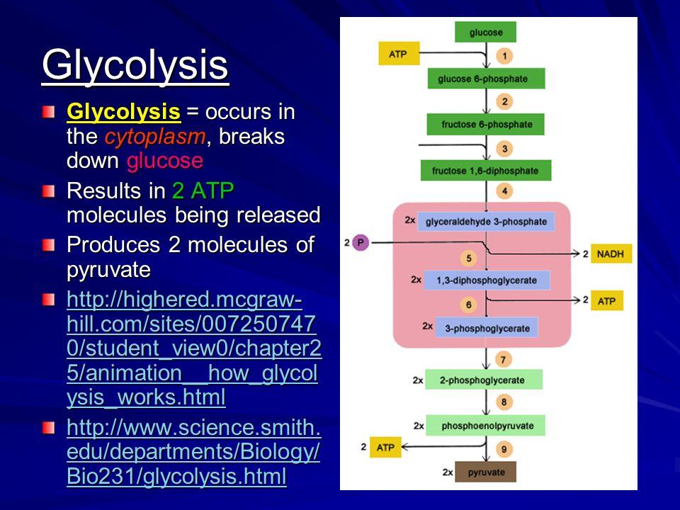 CELLULAR RESPIRATION Ch 9 Sec 3 Cellular Respiration