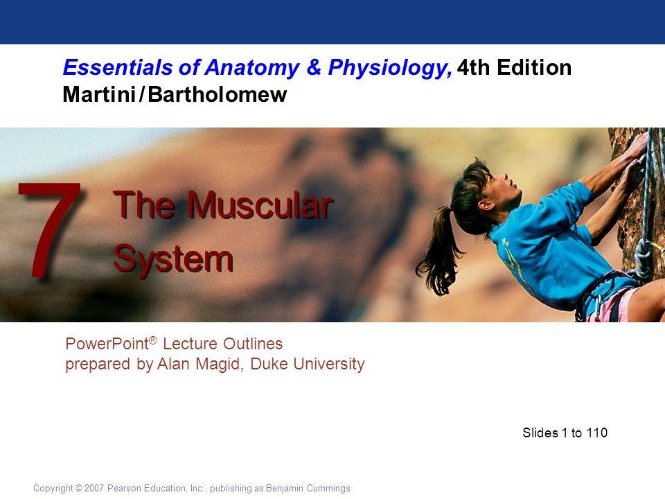 Essentials Of Anatomy Physiology 4th Edition Martini