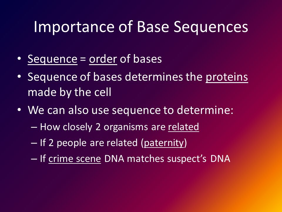 Importance of Base Sequences Sequence = order of bases Sequence of bases determines the proteins made by the cell We can also use sequence to determine: – How closely 2 organisms are related – If 2 people are related (paternity) – If crime scene DNA matches suspect's DNA
