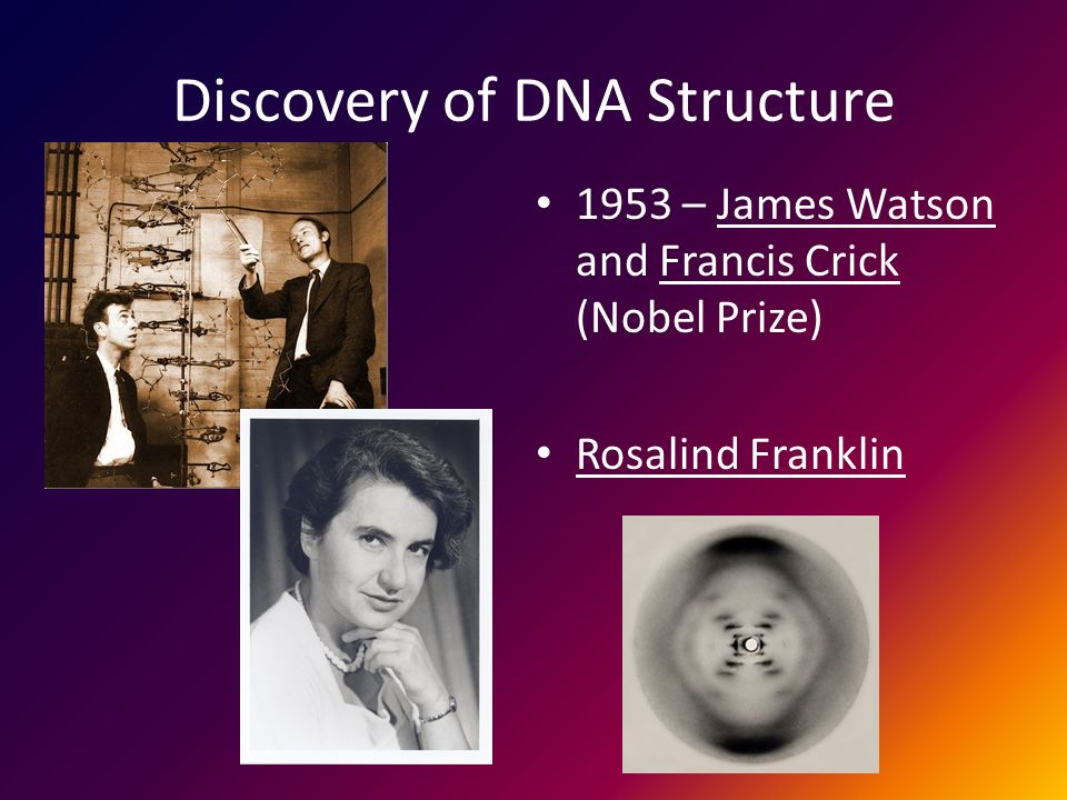 Discovery of DNA Structure 1953 – James Watson and Francis Crick (Nobel Prize) Rosalind Franklin