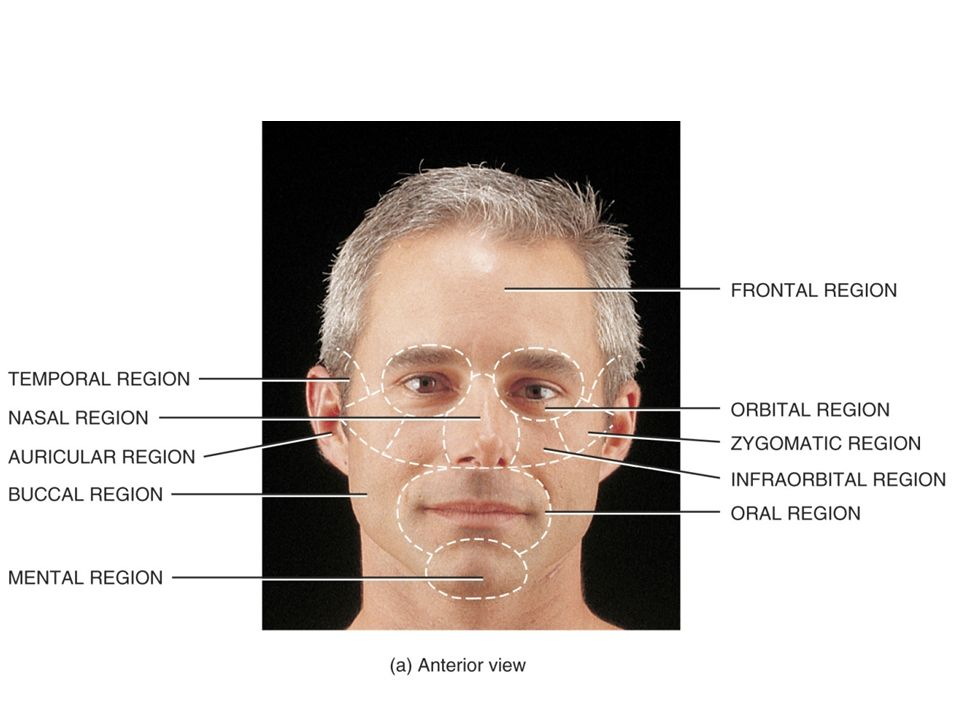 Surface Anatomy Head & Neck. Surface Anatomy A branch of gross ...