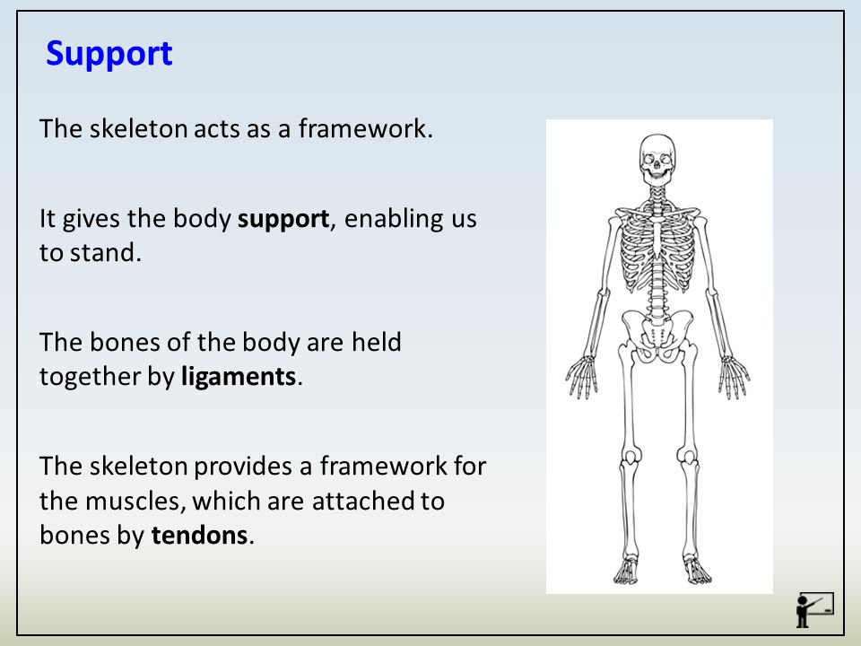 The Functions Of The Skeletal System Are What Are The Main