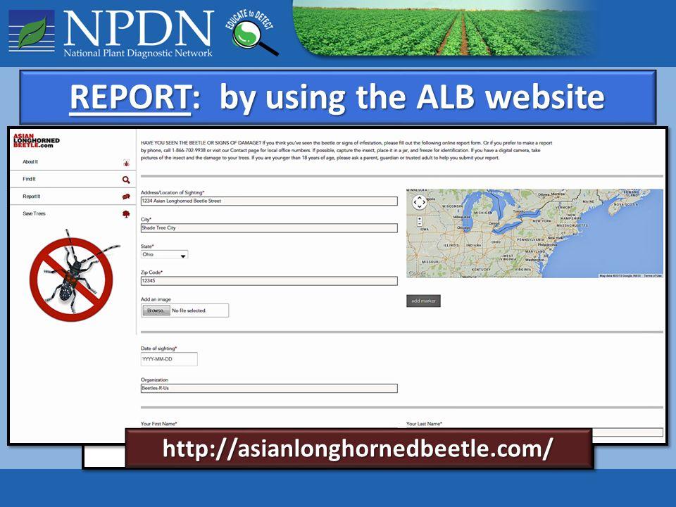 Albdatiing-Websites