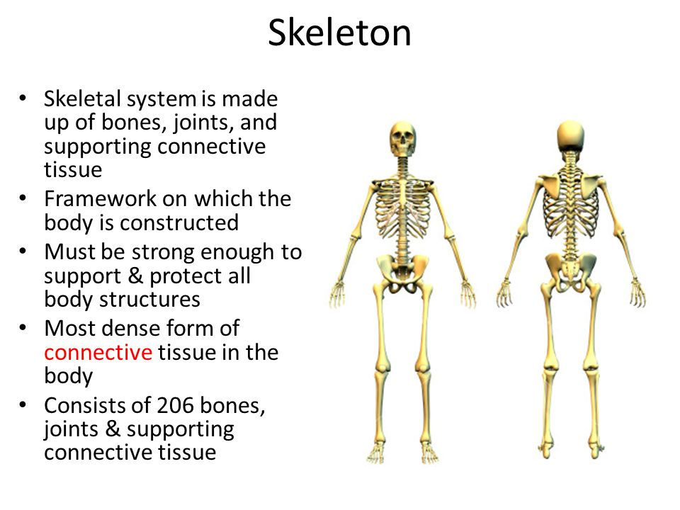The Skeleton: Bones & Joints Chapter 7 Anatomy & Physiology I. - ppt ...